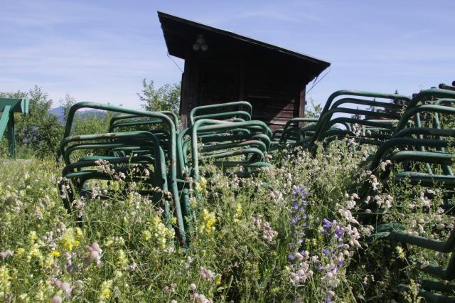 meadows grow back into the failed ski resort